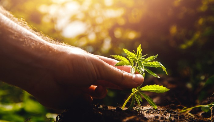 What do Hemp Farmers Need to Know About Seeds and Soil?